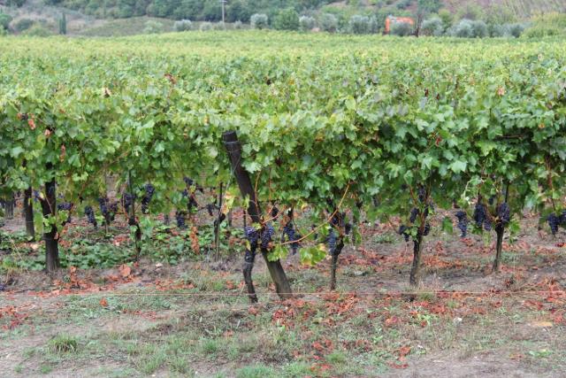 El placer de perderse – Toscana